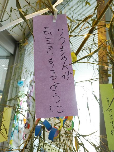 DSC_0163_00001.jpg